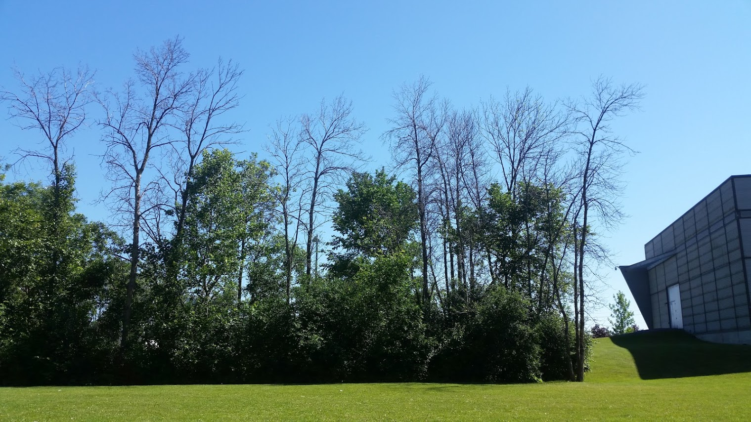 Photo of damages observed on trees and caused by insects in a wooded area.