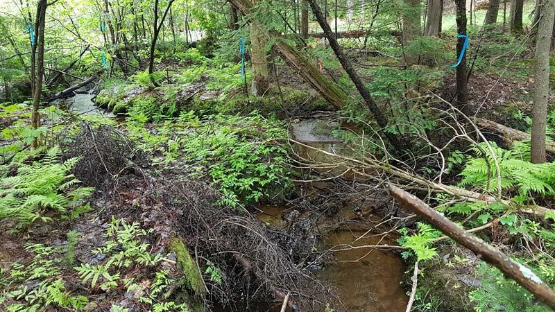 Caractérisation de milieux humides et de cours d'eau