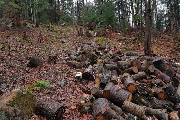 Évaluation de dommages forestiers